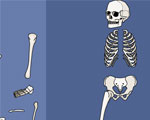 Skelet Bouwen